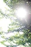 20100801_img_4651_1s