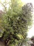 20101026_20091119696s
