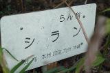 20110317_dscf4577_1s