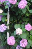 20110628_img_7296_1s
